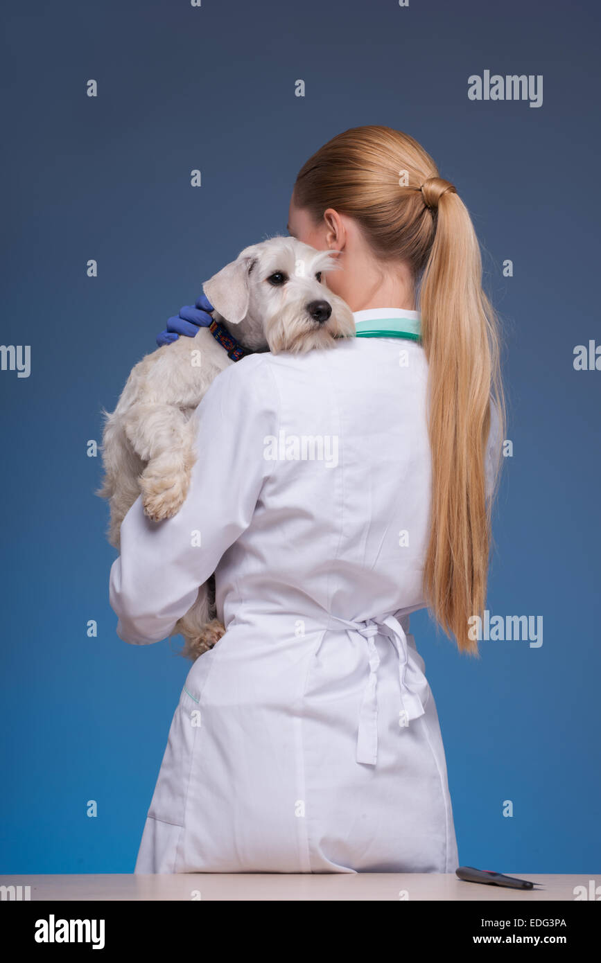 Beautiful female vet holding cute dog - Stock Image