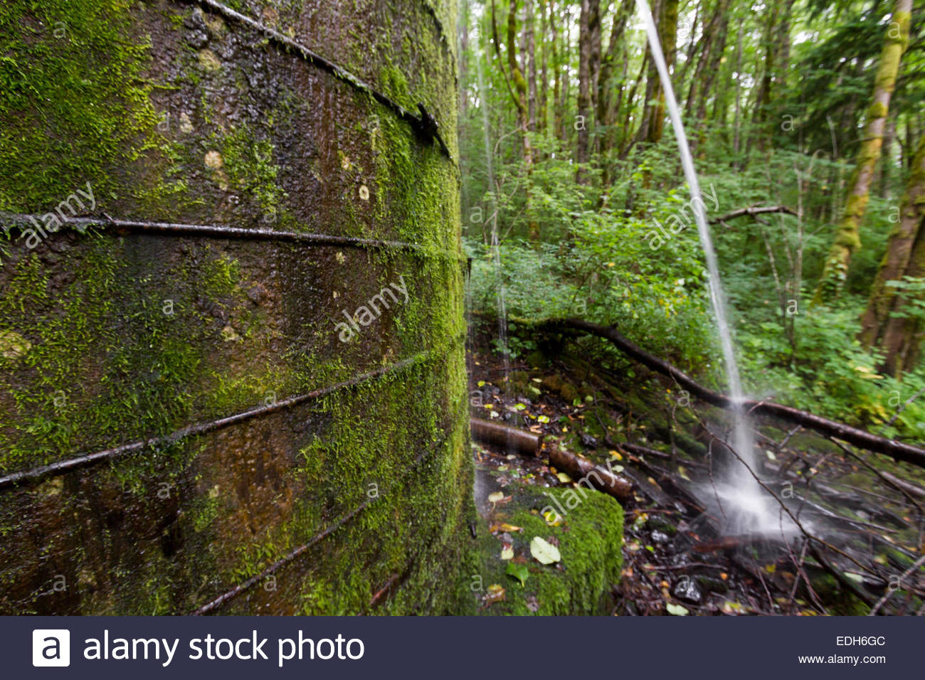 Old watertank in forest with a leak - USA - Oregon - Stock Image