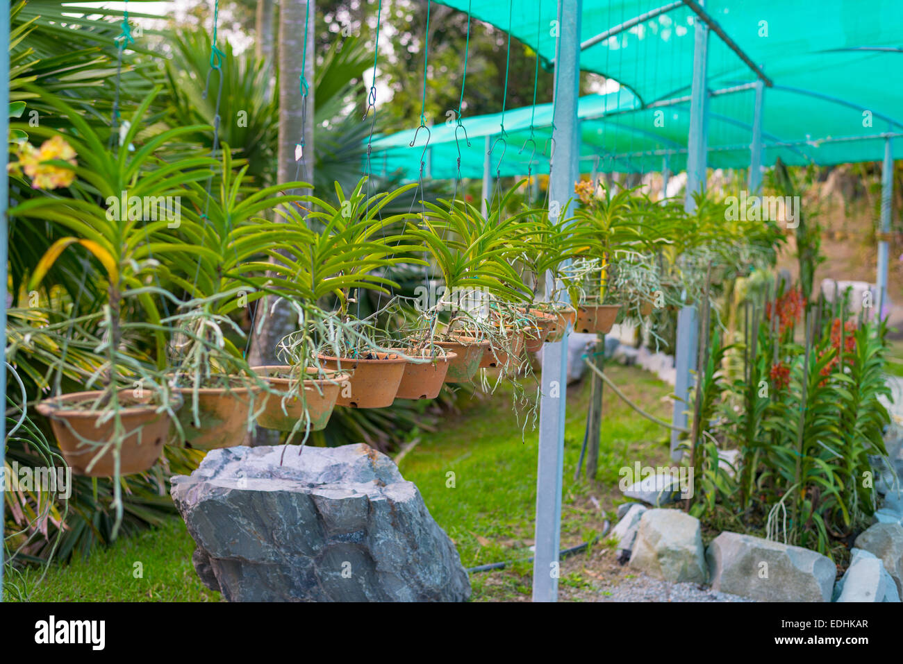Public Plant Nursery And Garden Center For Tropical Flower And Orchids.  Selective Focus.