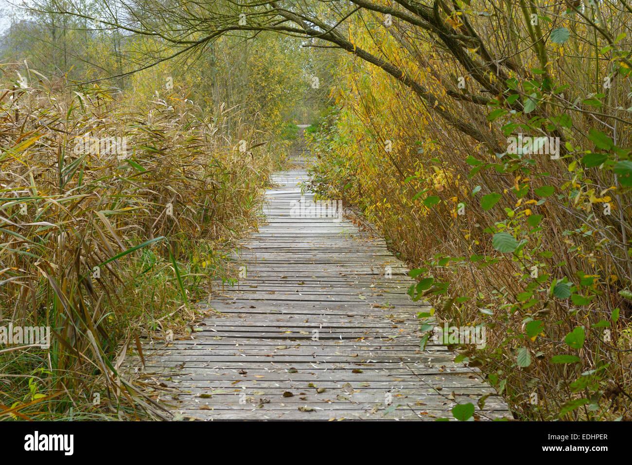 Boarded footpath near Stangenhagen, Trebbin , District Teltow-Flaeming, Brandenburg, Germany - Stock Image