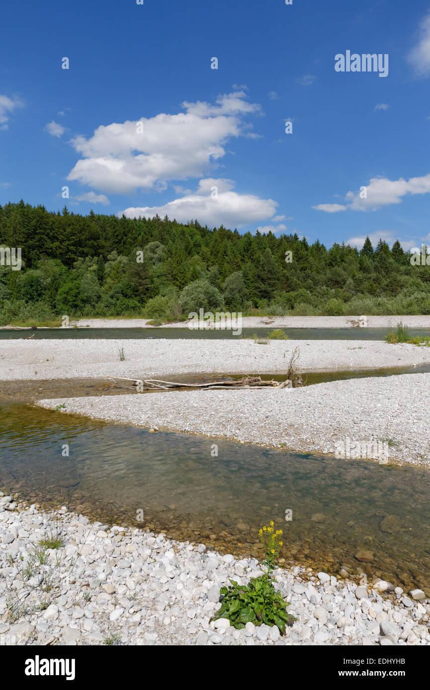 Isar river, Pupplinger Au, Geretsried, Upper Bavaria, Bavaria, Germany - Stock Image