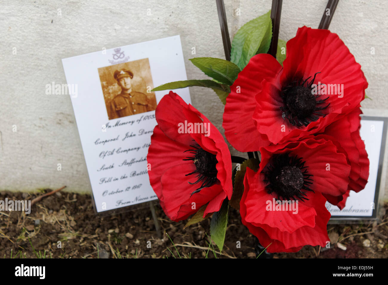Poppies at a gravestone of a killed soldier of the great war at Tyne Cot Cemetary in Zonnebeke, Belgien. - Stock Image