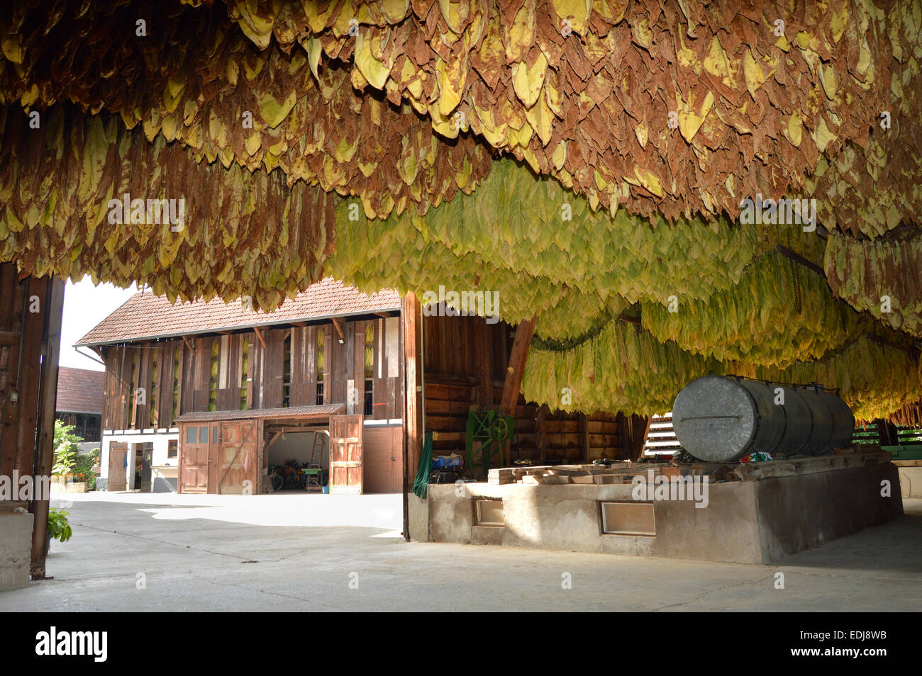 Inside a barn with drying tobacco leaves on timbered farm in the Alsace, France - Stock Image