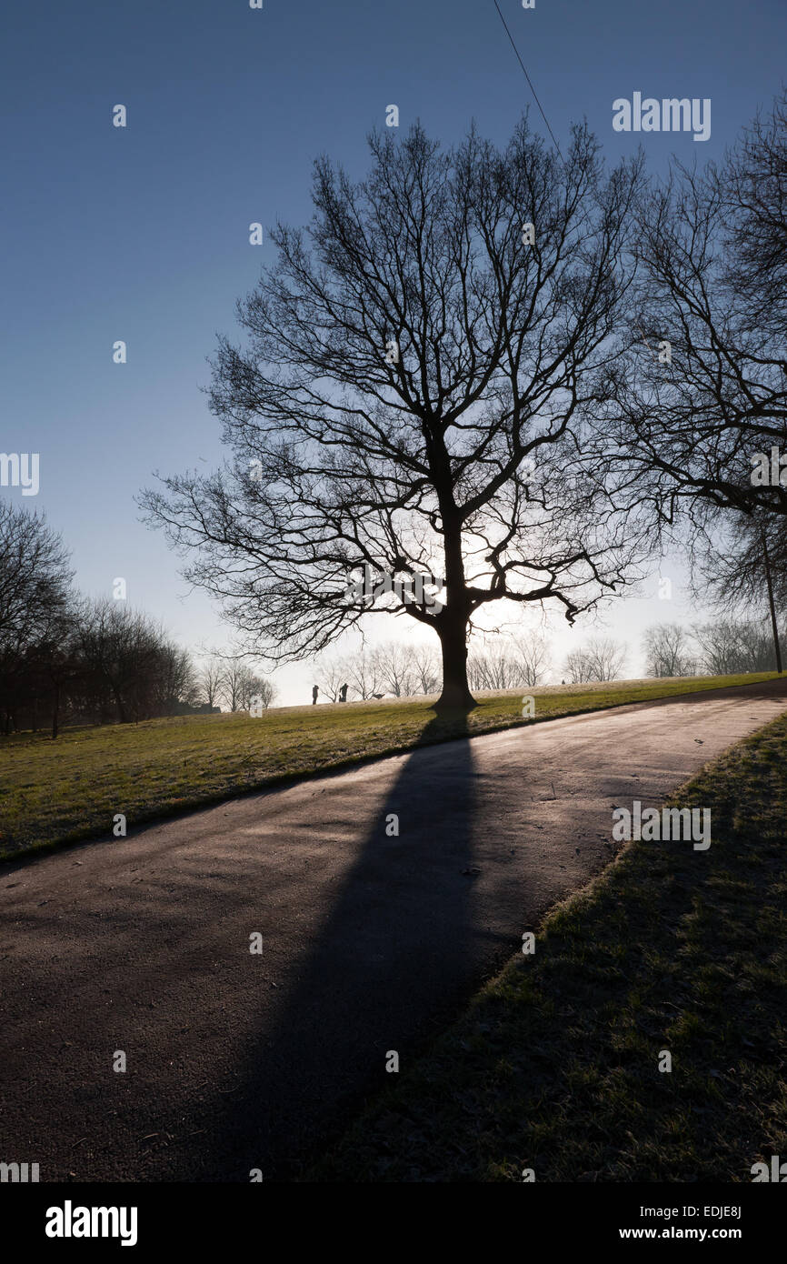 Backlit image of a tree in Hilly Fields Park, taken on a cold and frosty  winter morning in late December - Stock Image