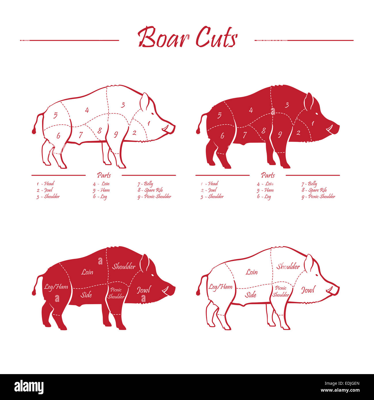 Wild hog, boar game meat cut diagram scheme - elements set red on white background - Stock Image