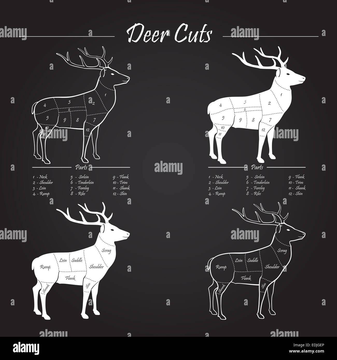 Phenomenal Deer Venison Meat Cut Diagram Sheme Elements On Chalkboard Stock Wiring 101 Cajosaxxcnl