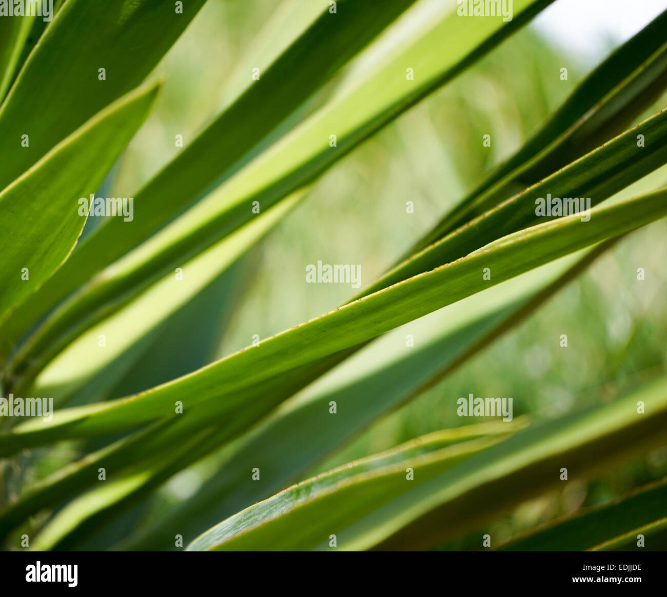 Green plant in sustainable garden. - Stock Image