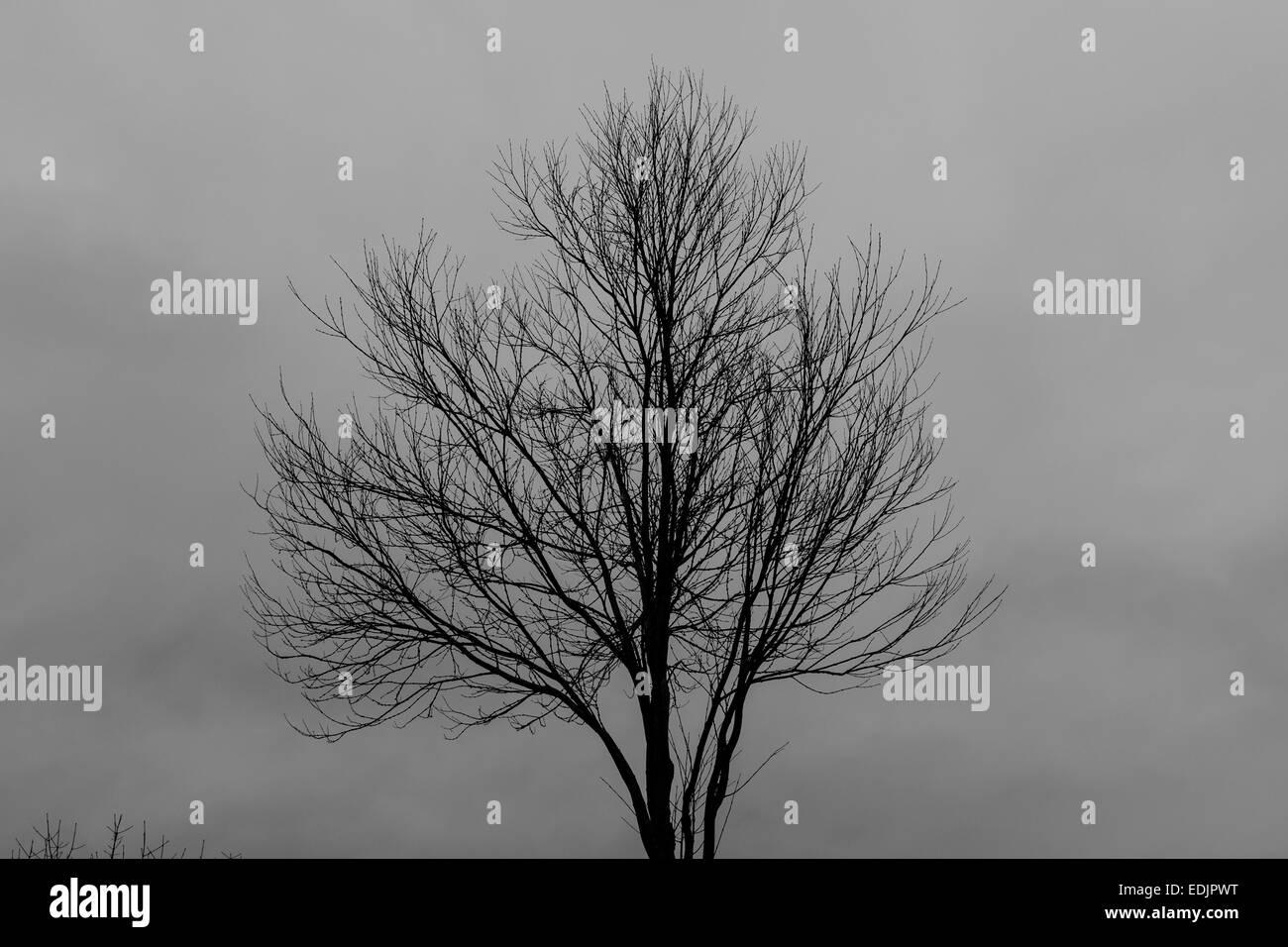 Bare tree against a overcast gloomy sky - Stock Image