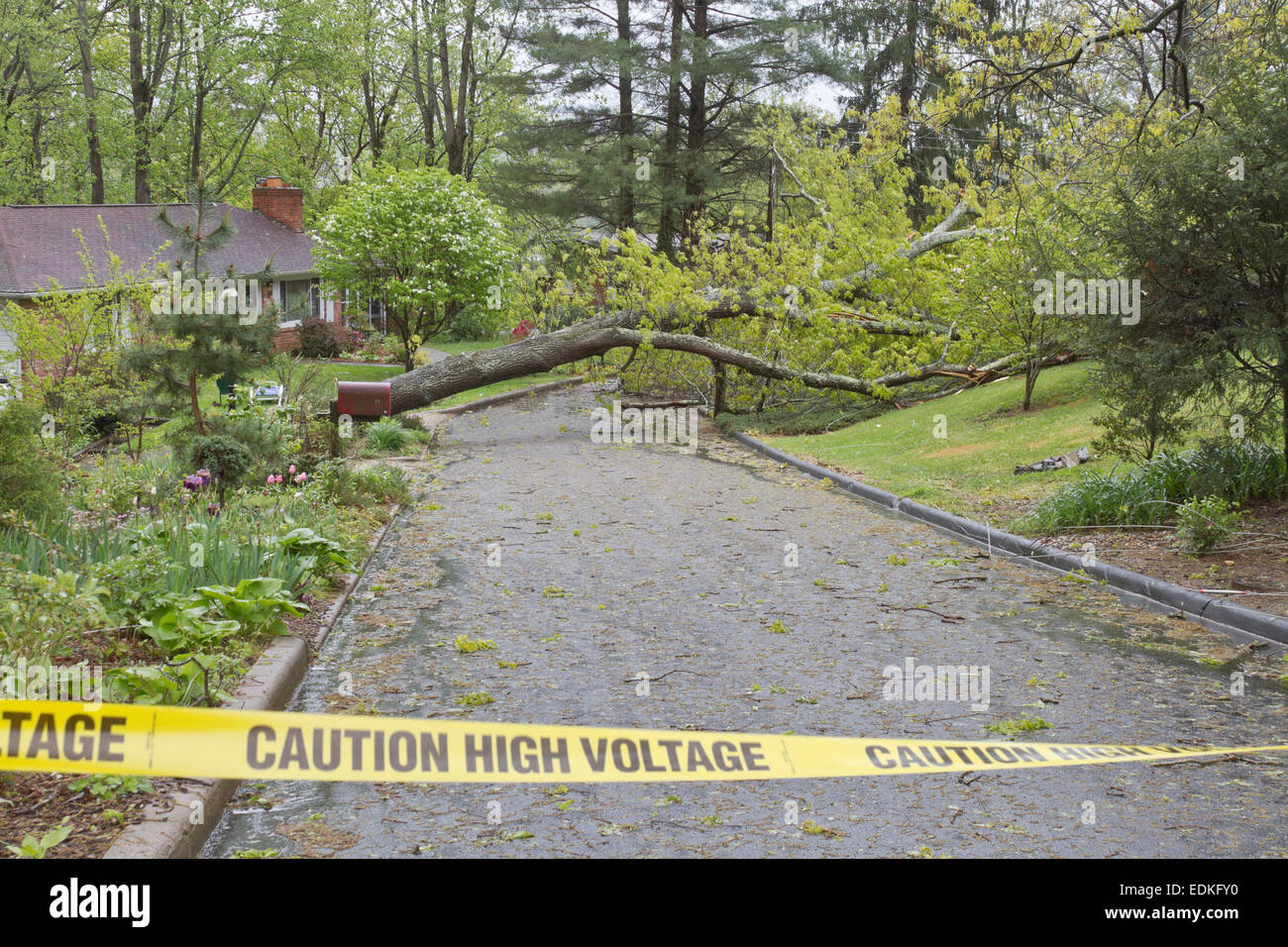 A neighborhood road is blocked by a large oak tree and downed power lines after a spring storm - Stock Image