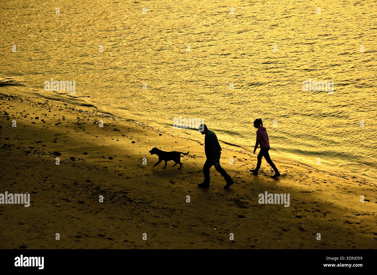 Two persons and dog walking on beach along water at sunset. - Stock Image