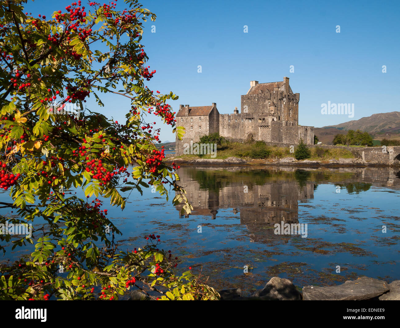 eilean donan castle loch duich with rowan berries in autumn - Stock Image