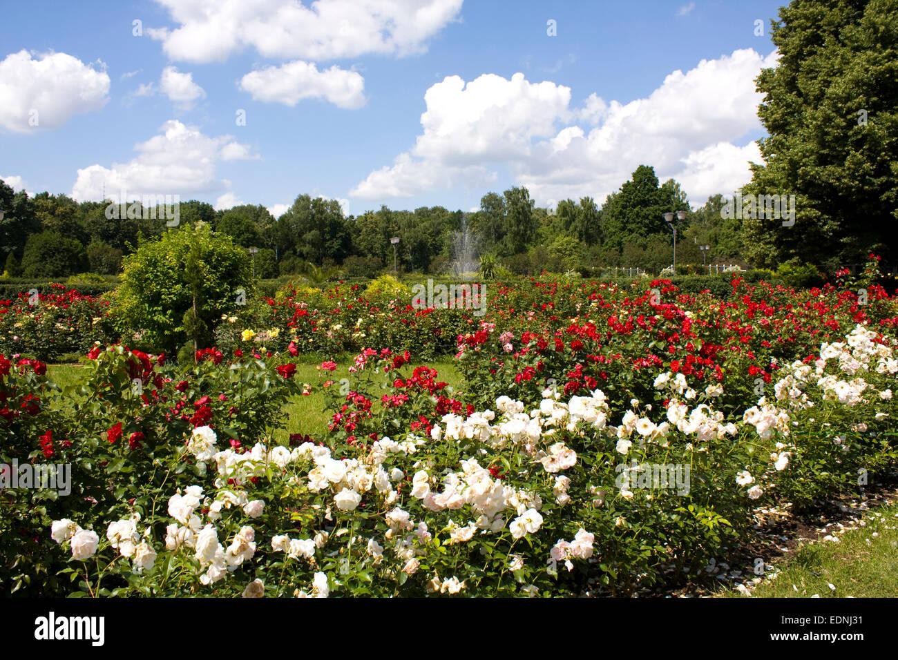 Rose Garden Park Stock Photos & Rose Garden Park Stock Images - Alamy