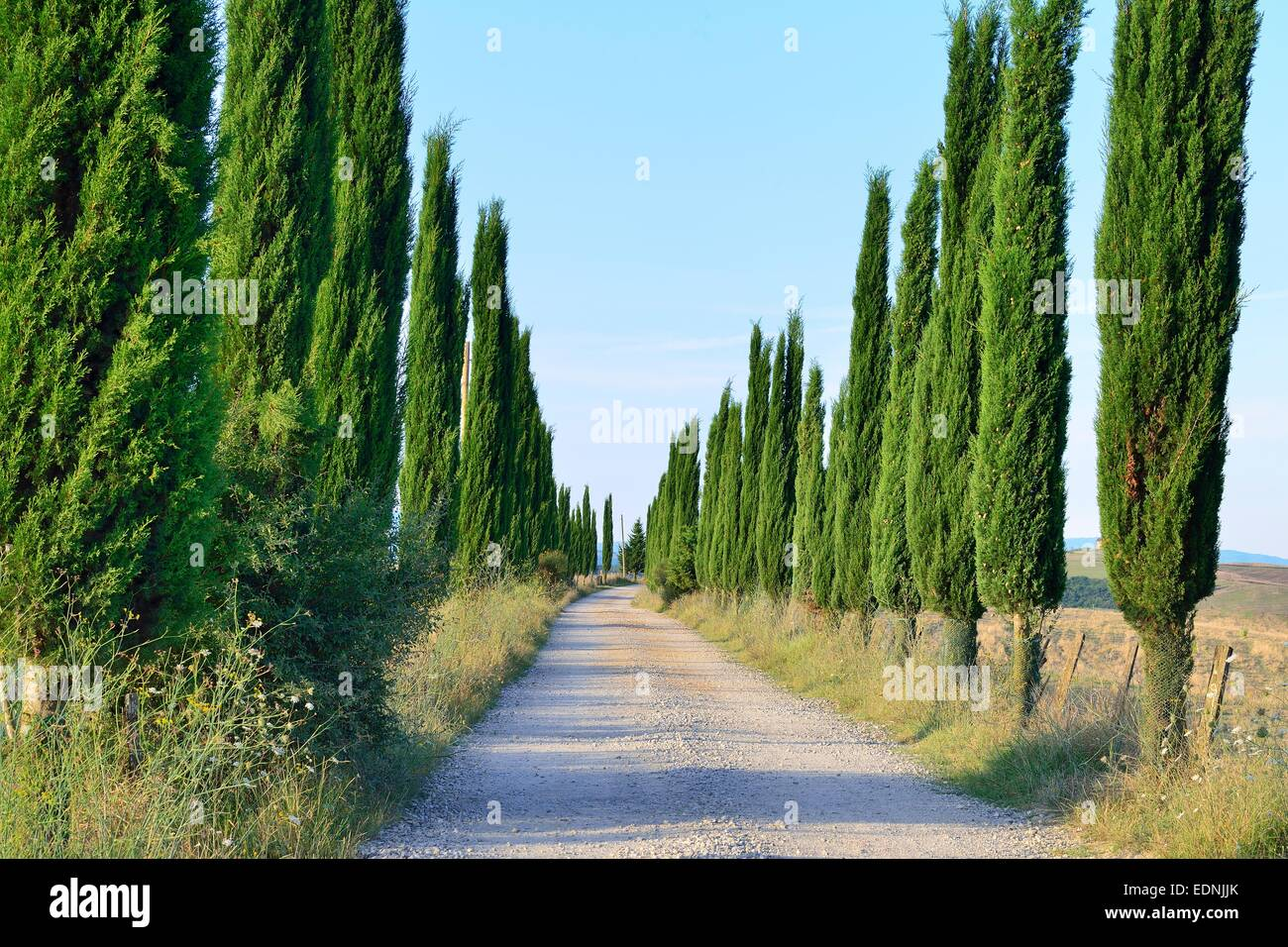 Road lined with cypress trees in the Crete Senesi, Province of Siena, Tuscany, Italy - Stock Image