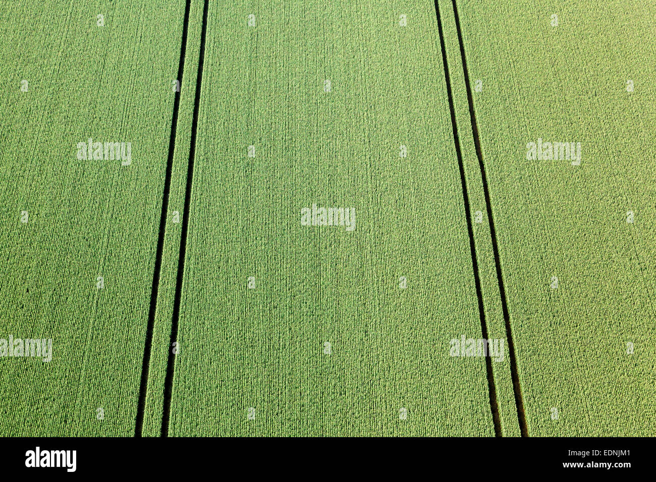 Aerial view, green wheat field with tractor tracks, Landshut, Lower Bavaria, Bavaria, Germany - Stock Image