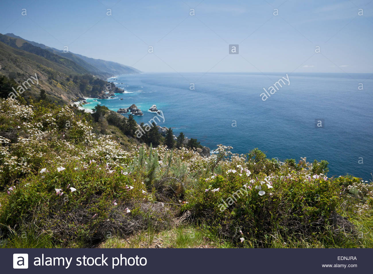 Spring Wildflowers on Scenic Bluff Along Pacific Coast, Big Sur, California - Stock Image