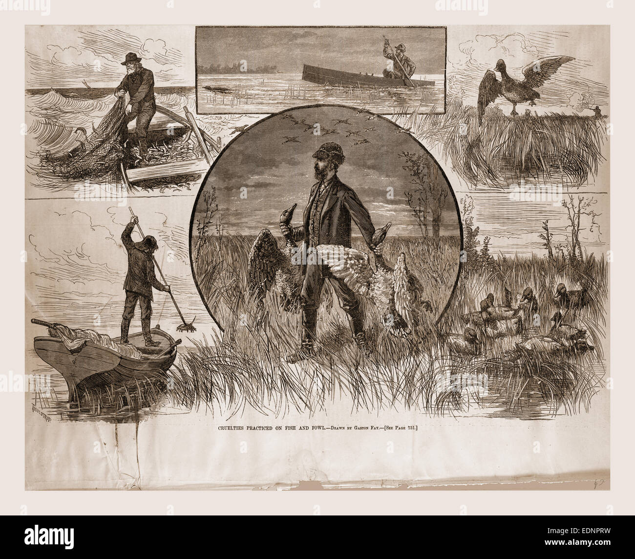 Cruelties practiced on Fish and Fowl, 1880, 19th century engraving, USA, America - Stock Image
