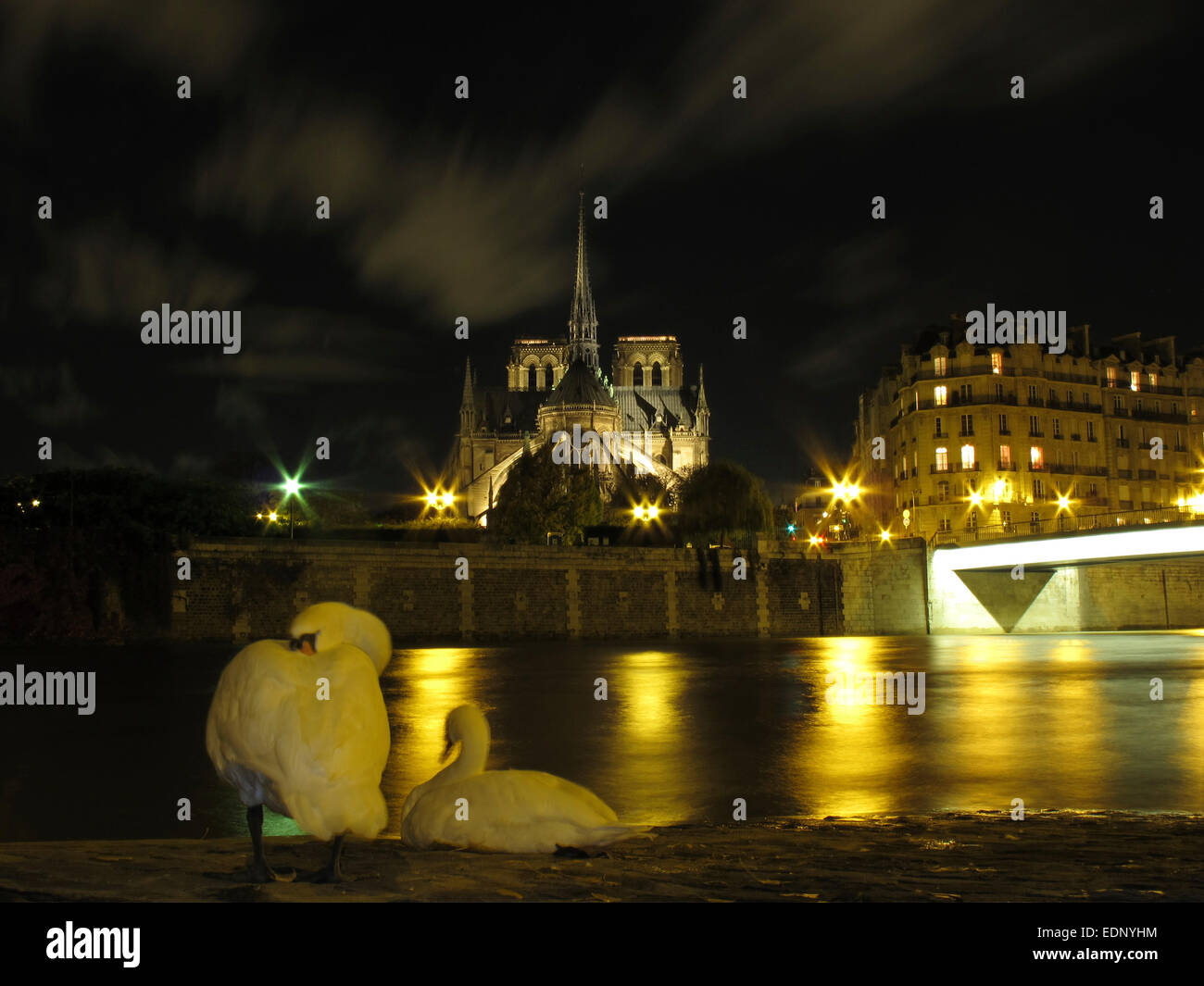 Night view of a swan on the Quai d'Orleans opposite Notre Dame and the Pont Saint Louis, Paris - Stock Image
