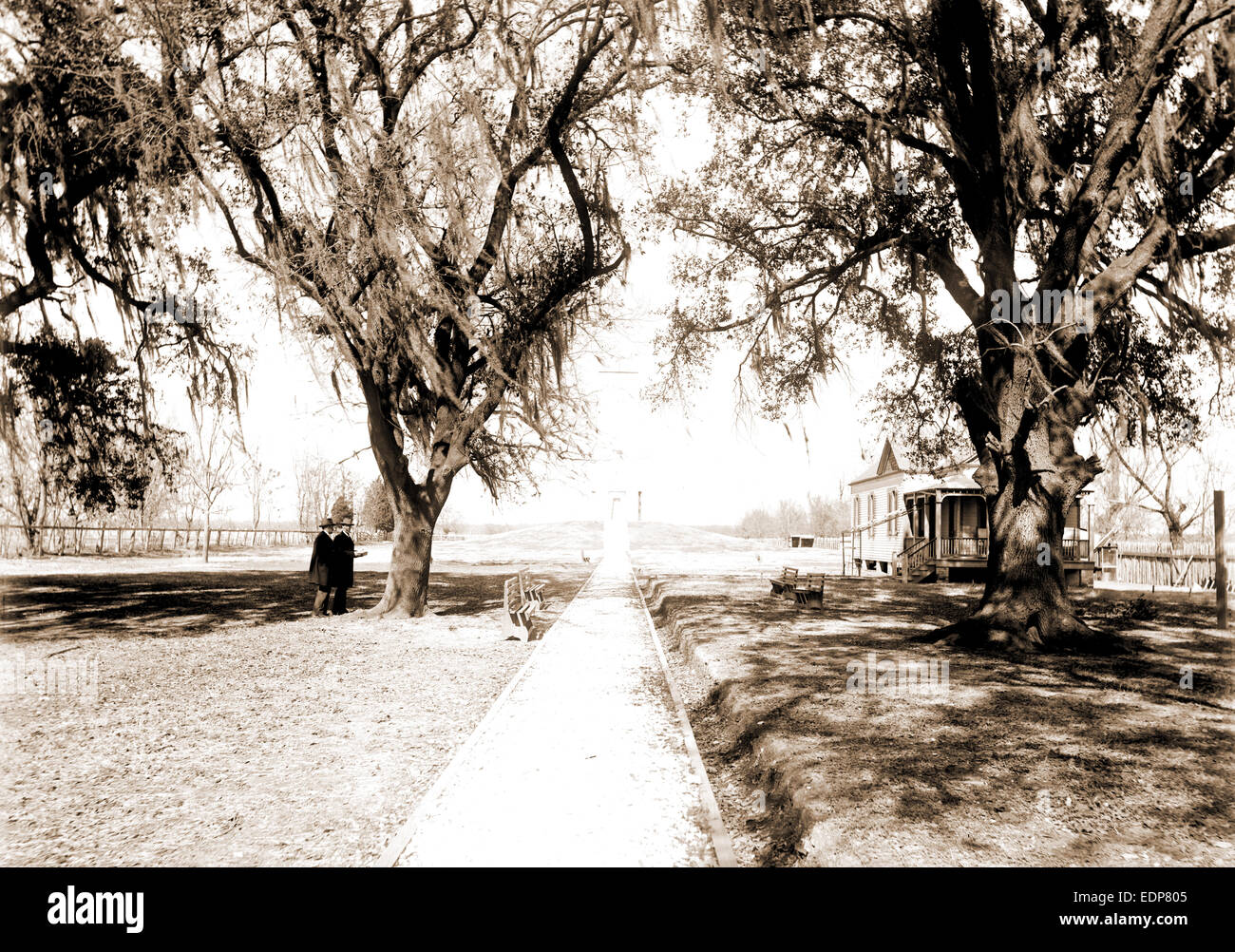 Infinite Photographs Photo Chalmette Oaks,Battle Monument,battlefields,memorials,New Orleans,LA,c1905
