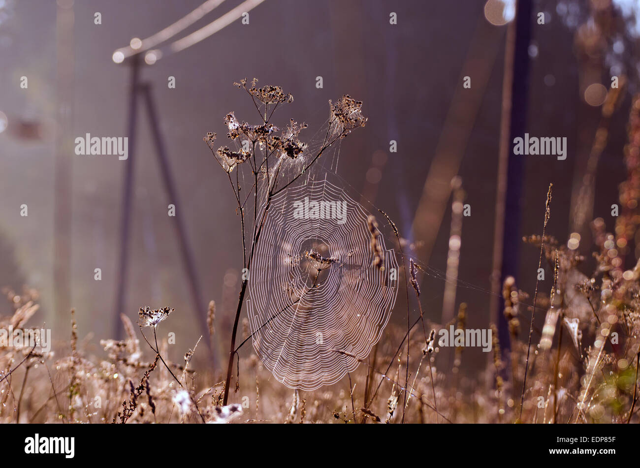 dewy summer end spider-web on farmland field grass in morning sunlight - Stock Image