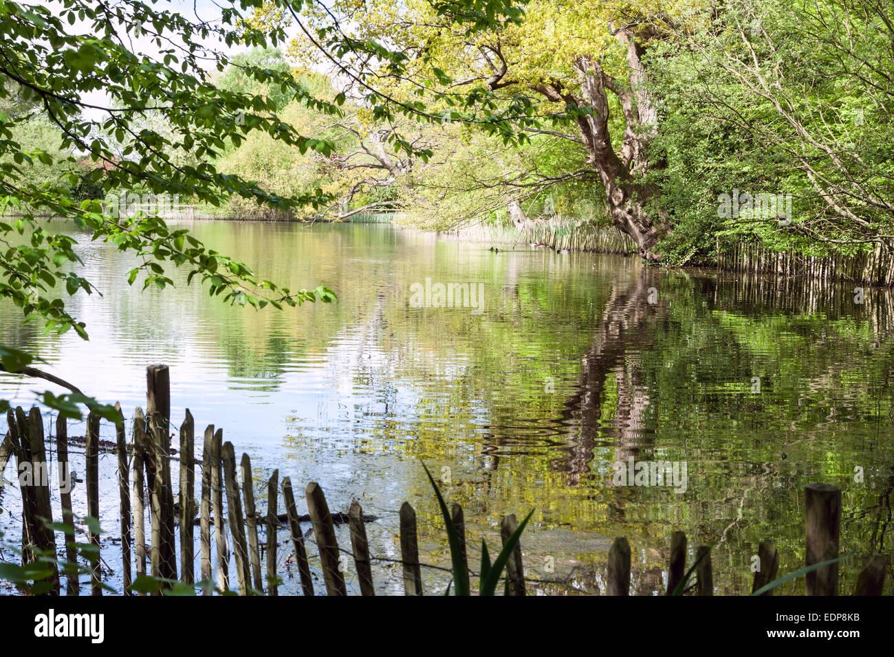 A beautiful lake - Danbury Country Park - UK - Stock Image