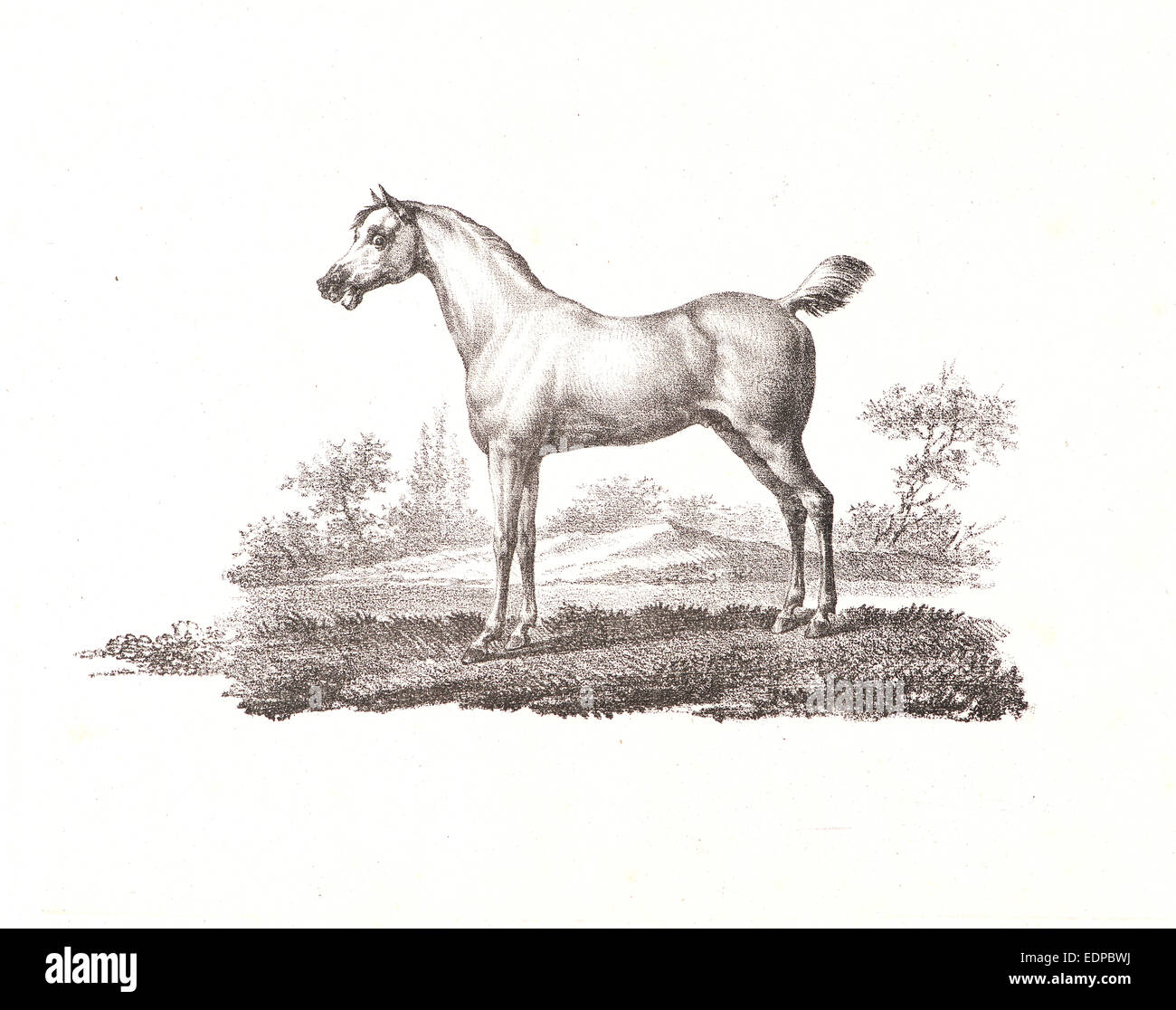 """Alois Senefelder (German, 1771 - 1834). A Crayon Drawing, from """"Receuil Papryographique"""", 1820 - Stock Image"""
