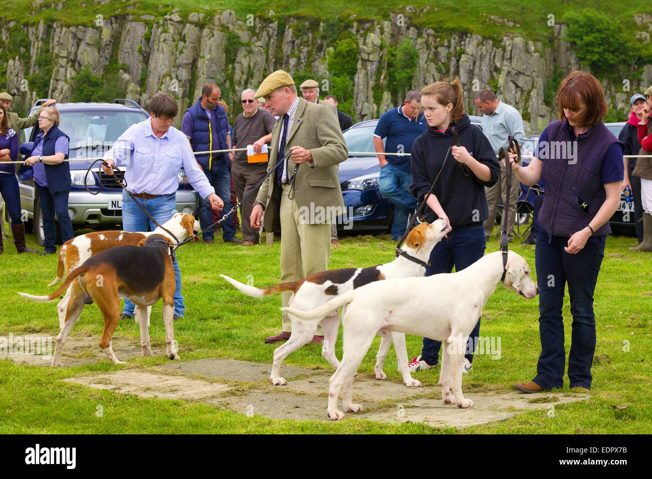 Owners showing Foxhounds. The Roman Wall Show, Steel Rigg Hadrian's Wall Northumberland England UK - Stock Image
