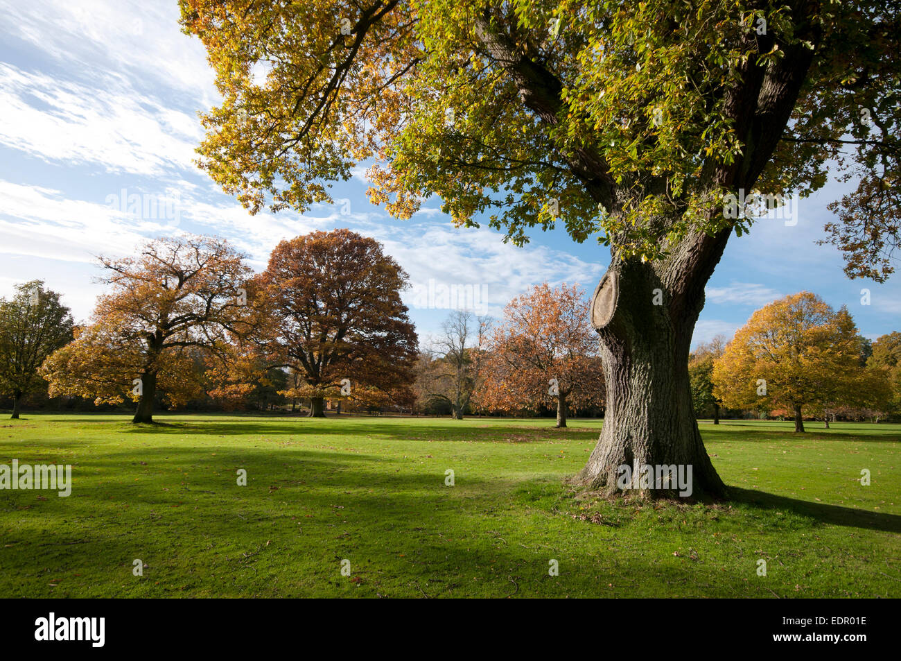 camperdown park autumn angus tayside dundee - Stock Image