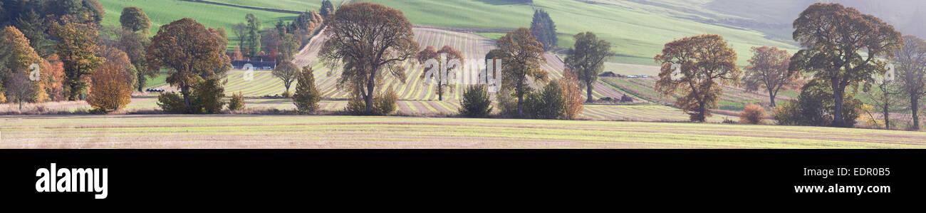 fields of angus - Stock Image