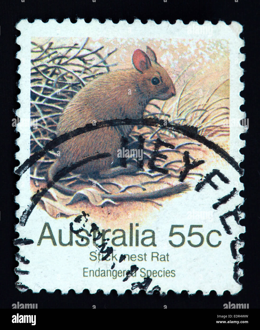 Used and postmarked Australia / Austrailian Stamp Stick Nest Rat Endangered Species 55c - Stock Image