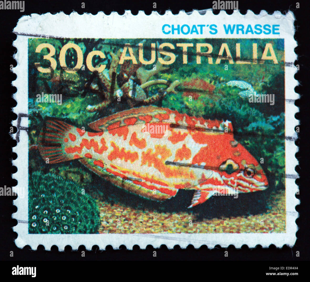 Used and postmarked Australia / Austrailian Stamp Choat's Wrasse - Stock Image
