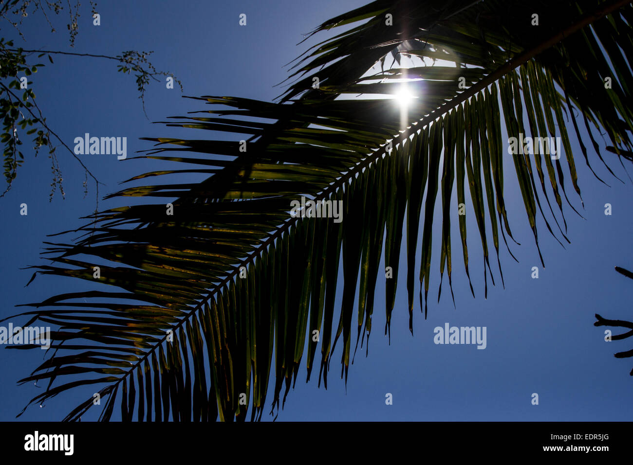 On holidays at the paradise. Sun passes through a palm tree. - Stock Image