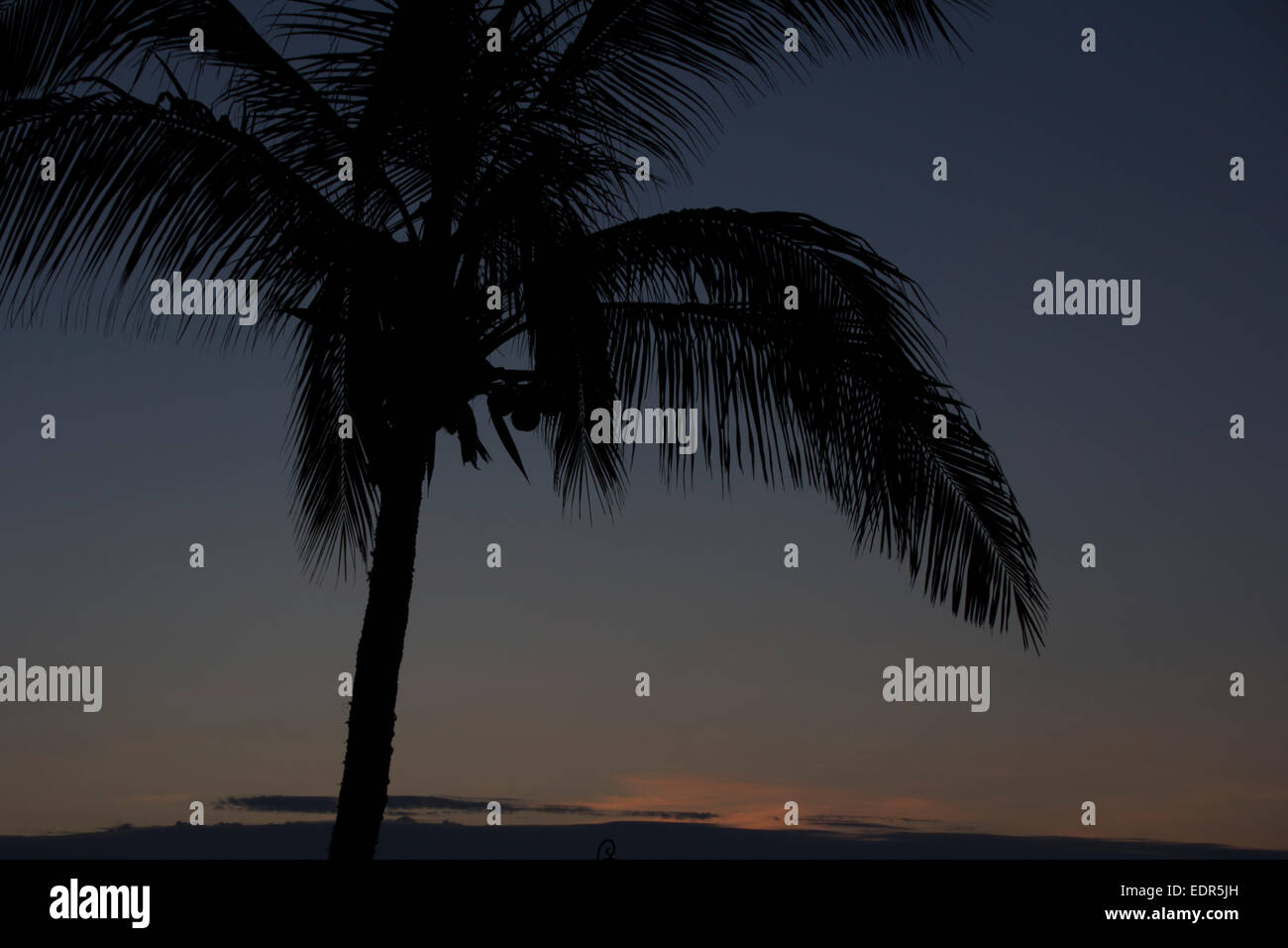 Dawn at the paradise. A Palm tree silhouette at Dawn at the Beach of Baja California. - Stock Image