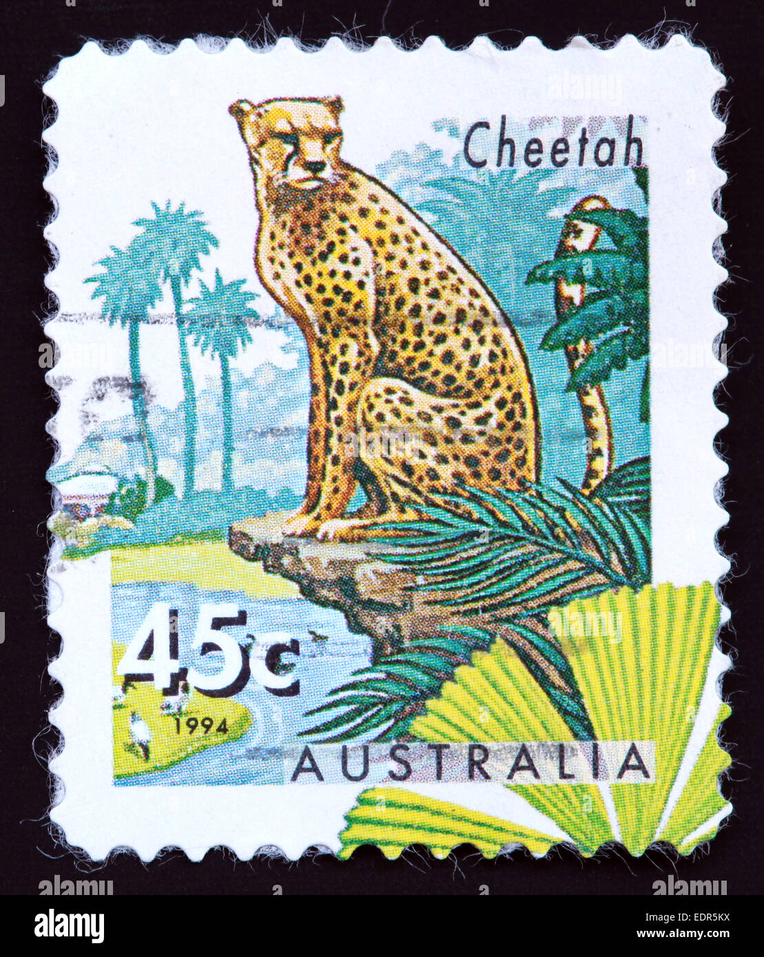 Used and postmarked Australia / Austrailian Stamp 45c 1994 Cheetah Stock Photo