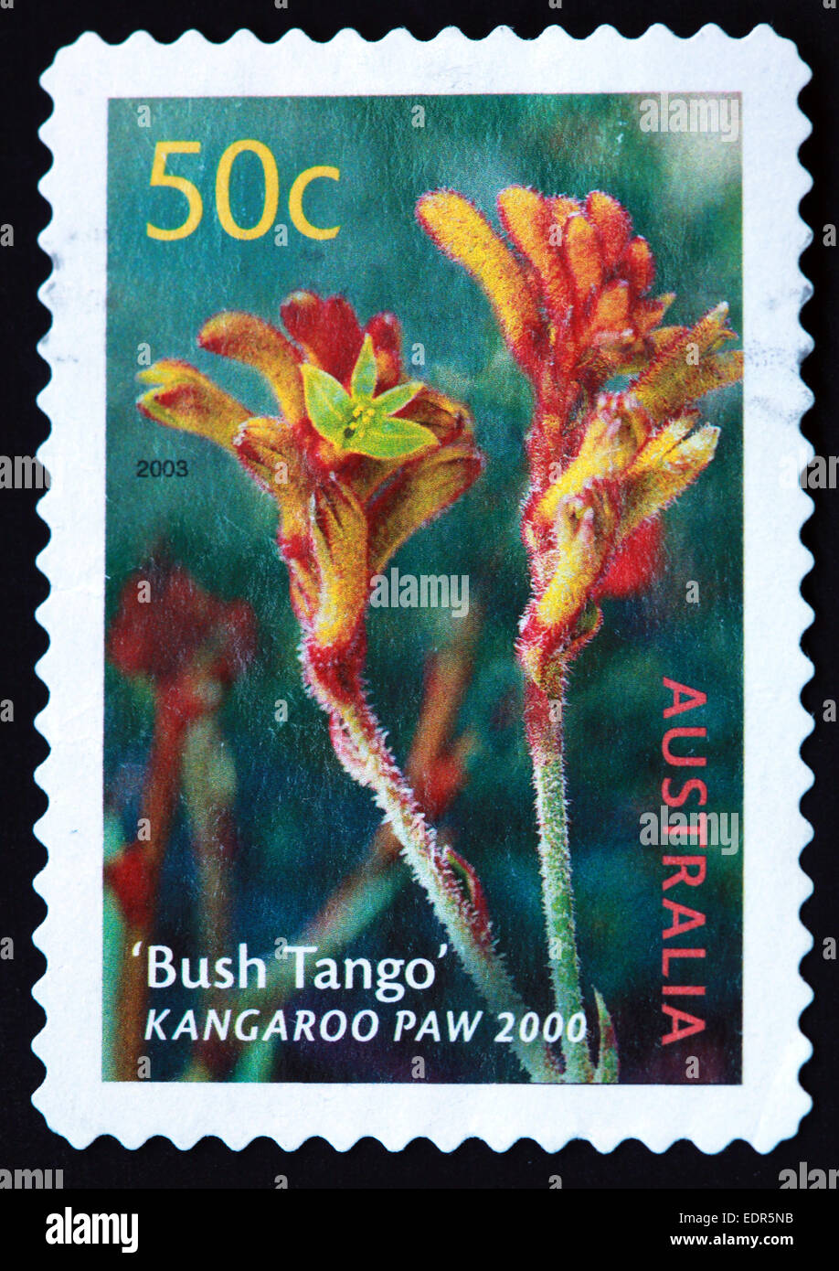 Used and postmarked Australia / Austrailian Stamp 2003 50c Bush Tango Kangaroo Paw 2000 - Stock Image