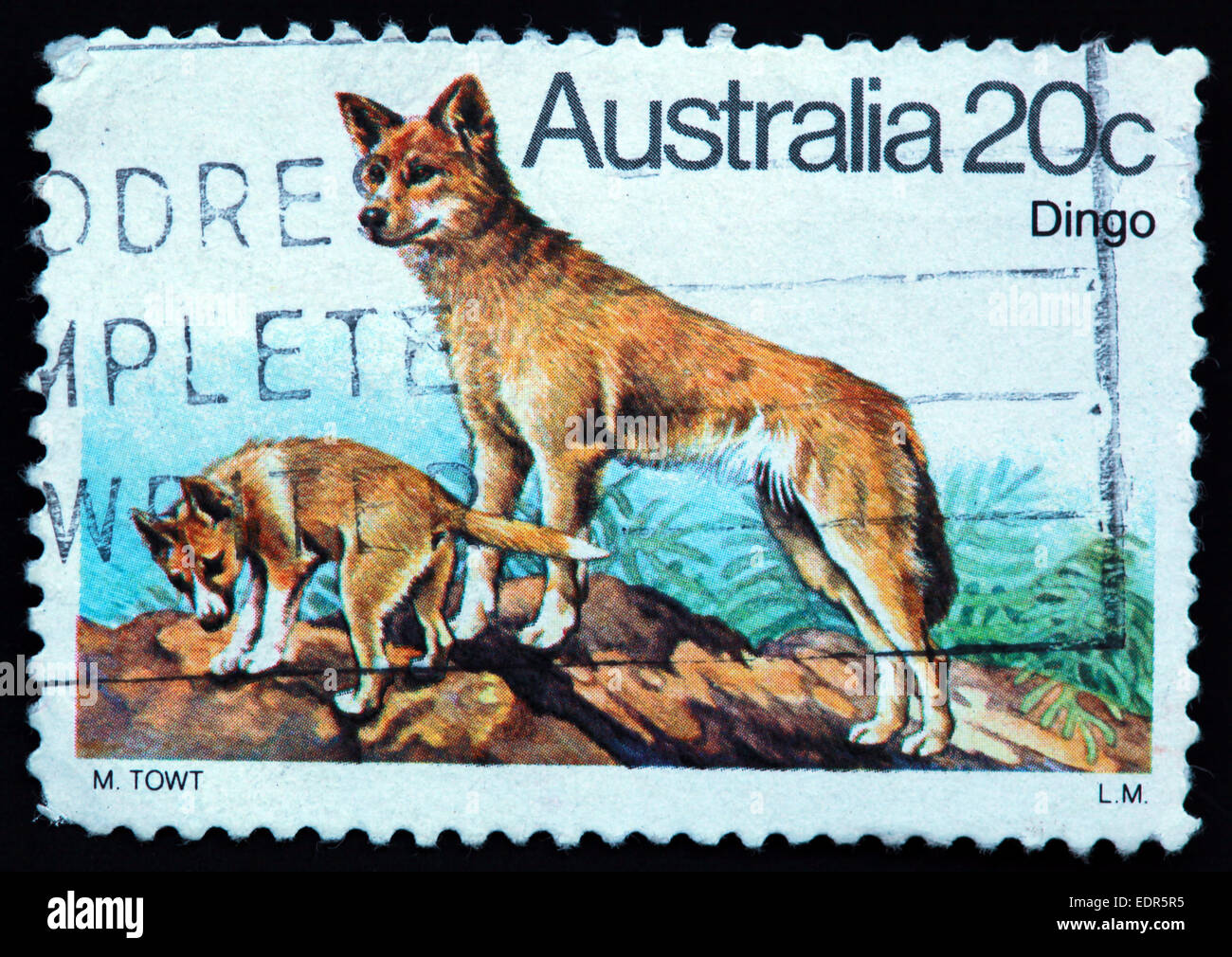 Used and postmarked Australia / Austrailian Stamp 20c Dingo L.M LM M TOWT Stock Photo