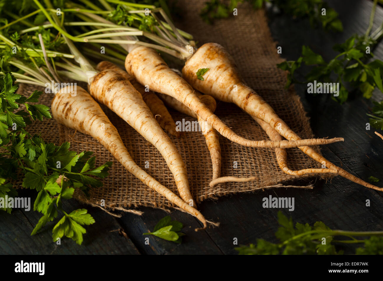 Raw Organic Parsley Root on a Background - Stock Image