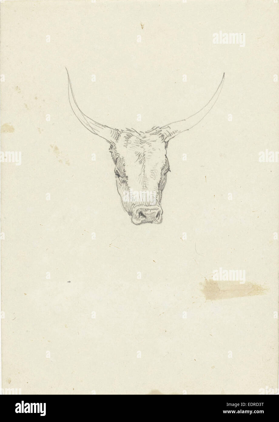 Bovine head, from the front, Hendrik Voogd, 1788 - 1839 - Stock Image