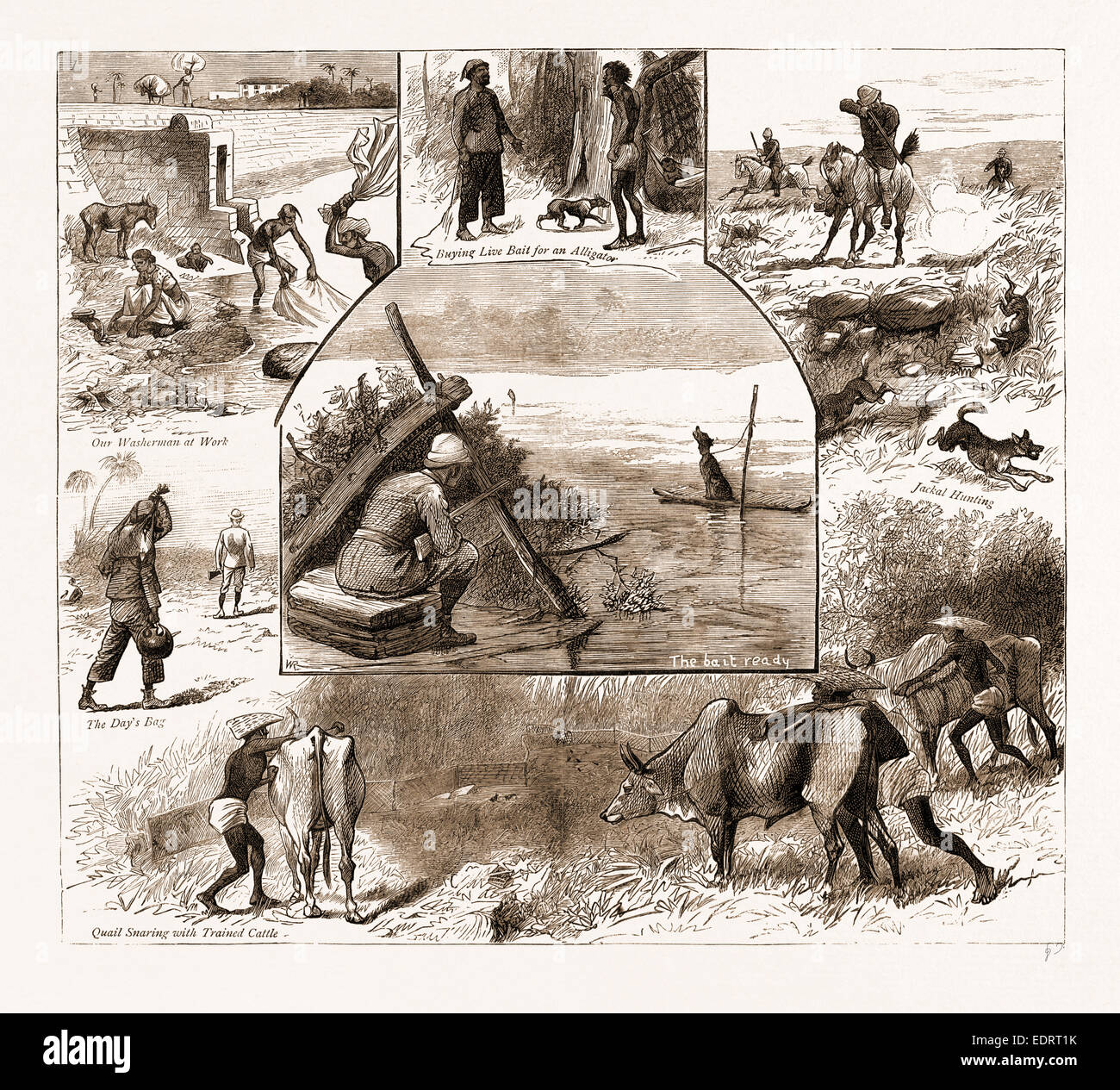 SOME INDIAN SPORTING NOTES, 1883; The bait ready, Quail Snaring with Trained Cattle, Jackal Hunting, Washerman at - Stock Image