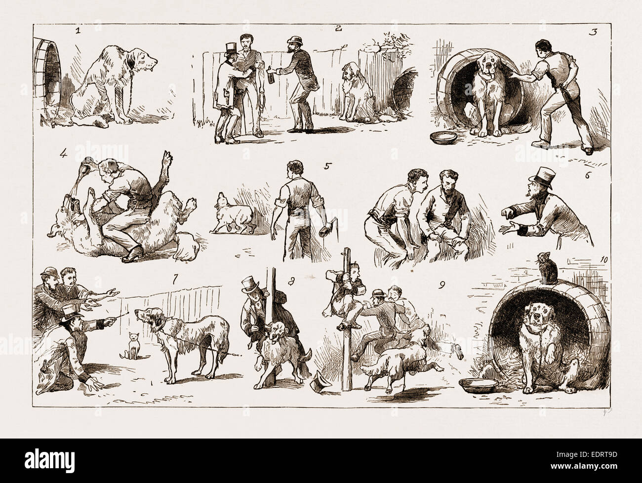 DOSING A DOG, 1883: 1. Our St. Bernard Showed Symptoms of Illness. 2. An Amateur Vet is Called in - Stock Image