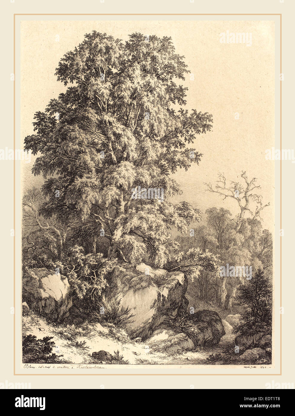 Eugène Bléry (French, 1805-1887), Beech Grove, 1840, etching with drypoint and roulette on chine collé - Stock Image