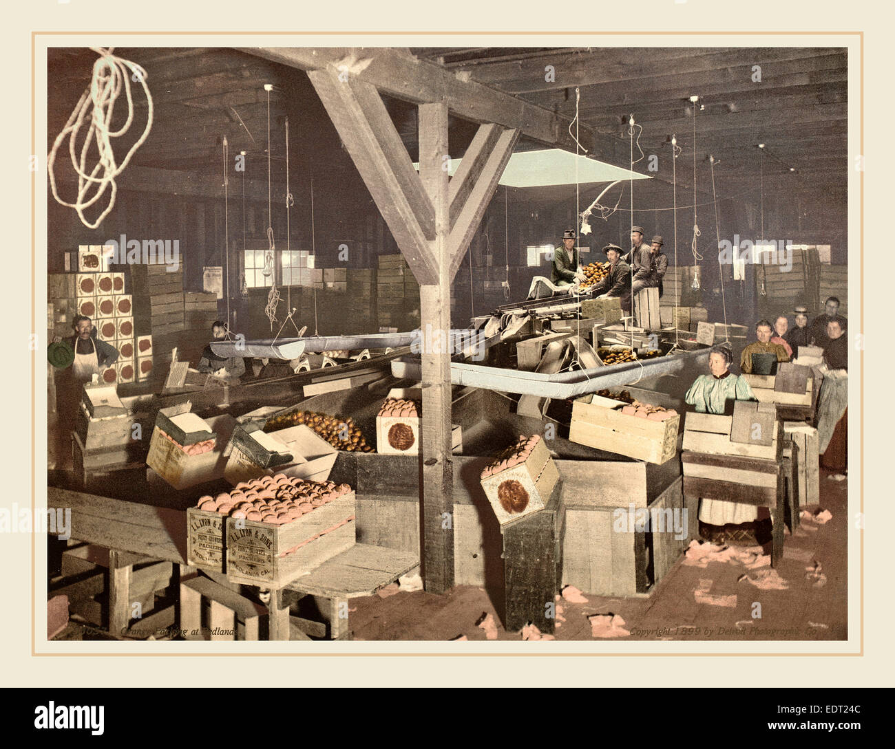 American 19th Century (Detroit Photographic Co.), Orange Packing at Redlands, 1899, photochrom - Stock Image