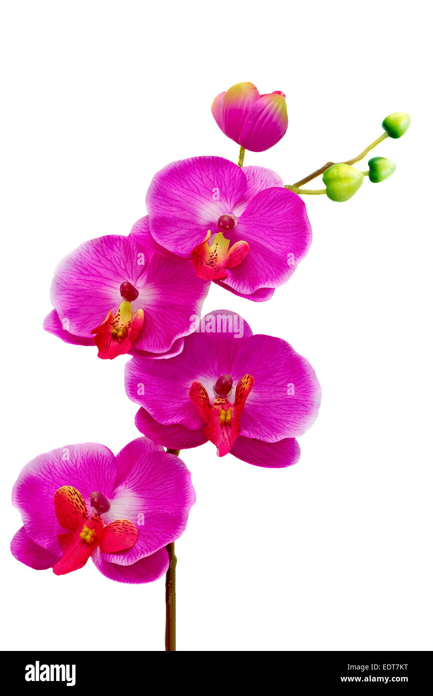 Beautiful artificial flower orchid hot pink on a white background beautiful artificial flower orchid hot pink on a white background mightylinksfo