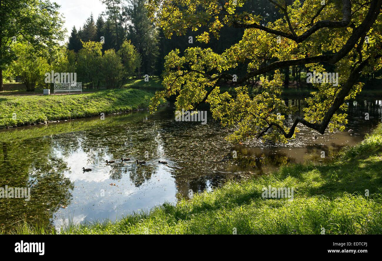 Ducks in Upper ponds of Catherine Park, Tsarskoye Selo, Russia - Stock Image