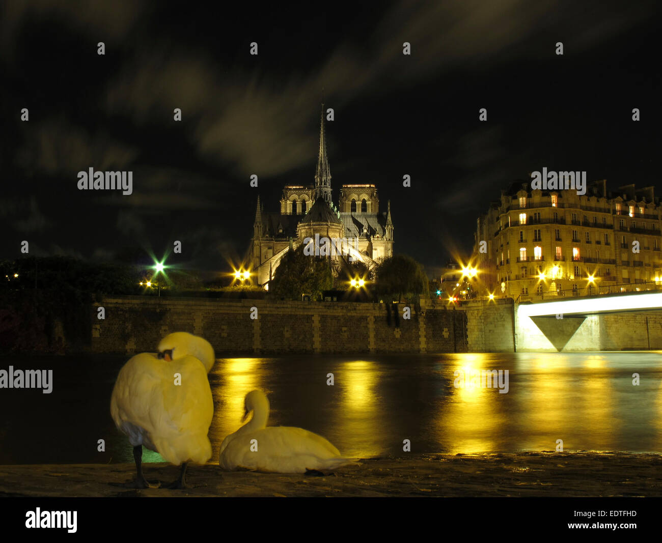 Night view of a swan on the Quai d'Orleans opposite Notre Dame and the Pont Saint Louis, Paris Stock Photo