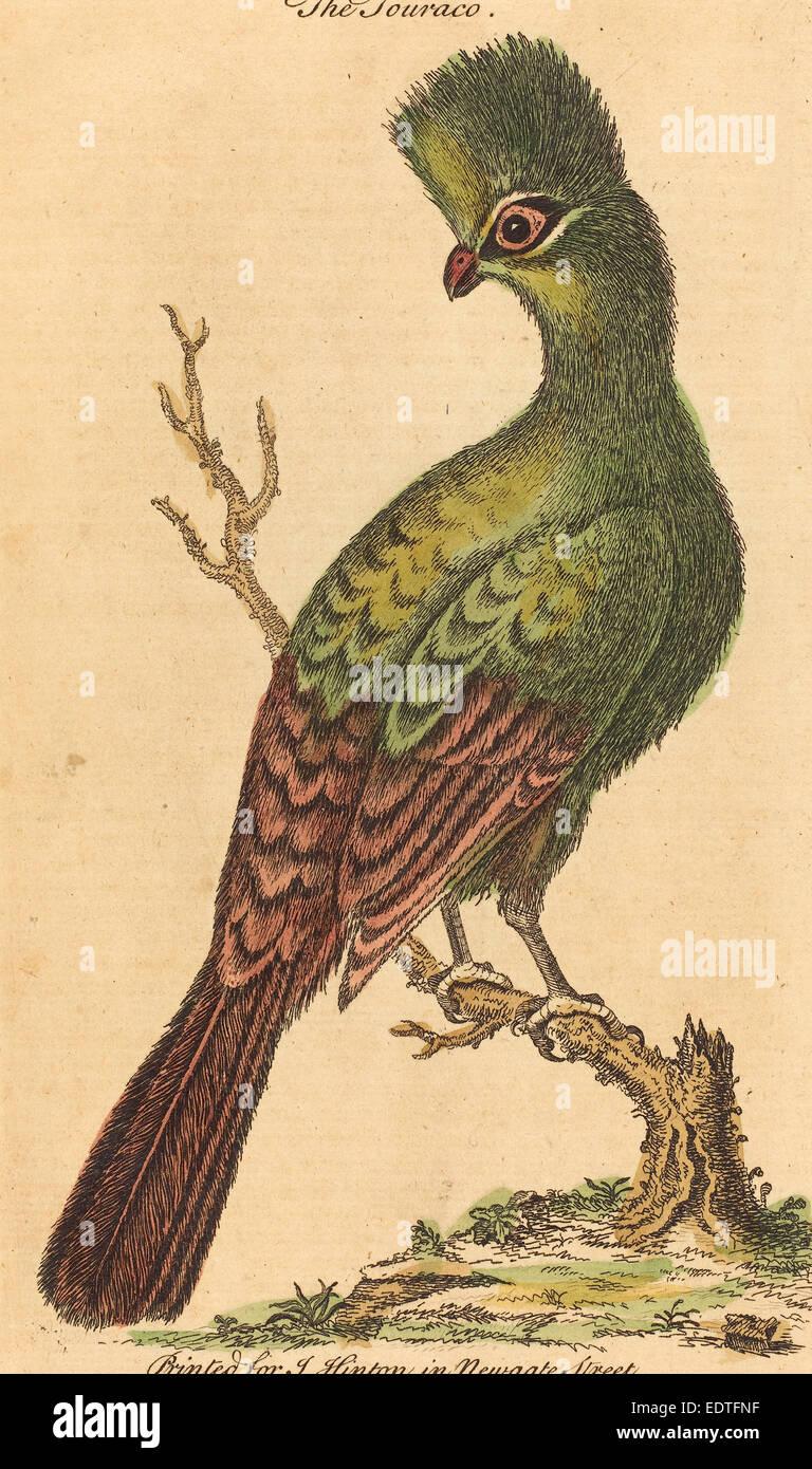 British 18th Century, The Touraco Bird, hand-colored etching - Stock Image