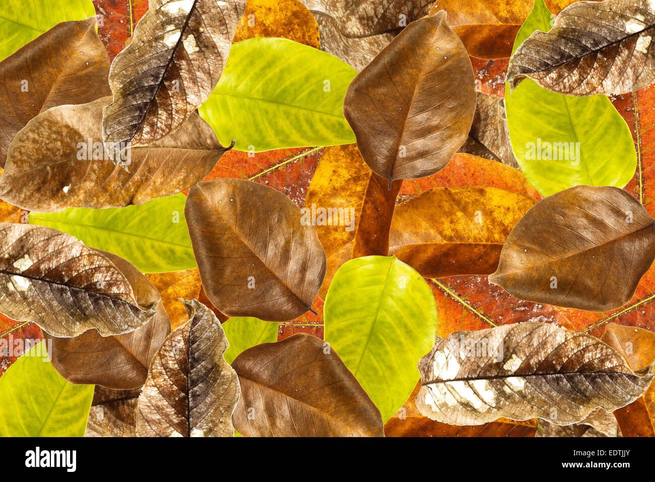 Leaves overlap background - Stock Image