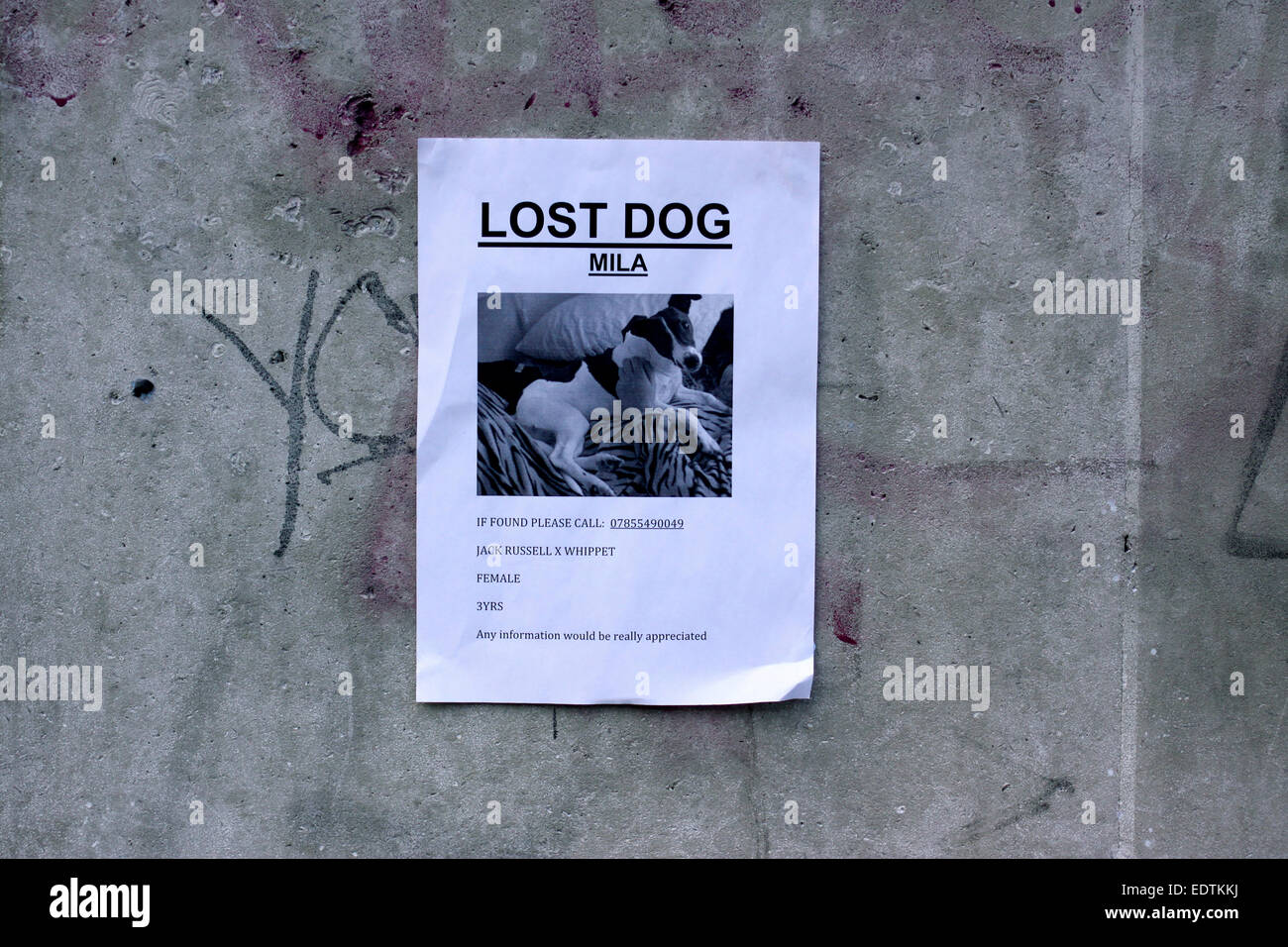 Poster for a missing dog in London - Stock Image