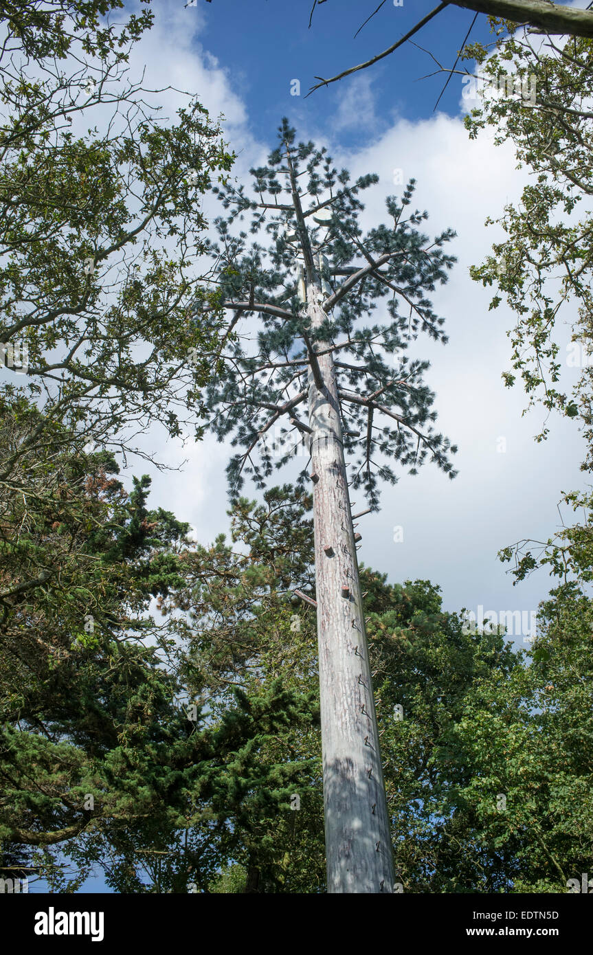 Camouflaged cellphone tower disguised as pine tree - Stock Image