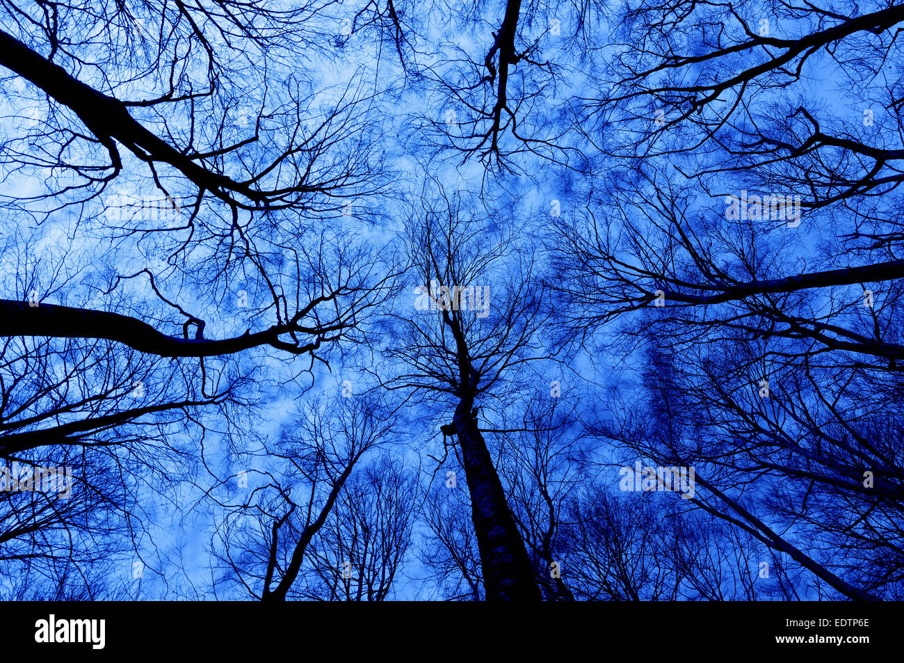 horror forest at night with a directly below persective - Stock Image