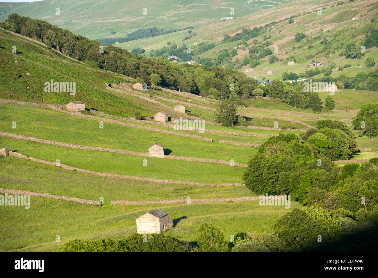 Barns and drystone walls in Swaledale near Thwaite. Yorkshire Dales National Park - Stock Image
